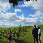 【初夏のドイツ~ラインガウ~】ブドウはここまで育っていました!