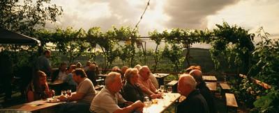 オーストリアのオーガニックワイン