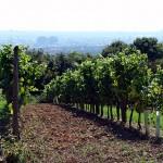 春の選りすぐりオーストリアワインイベント2選