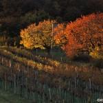 秋の選りすぐりオーストリアワインイベント3選