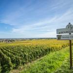 世界有数のワイン産地 ブルゴーニュワインの歴史