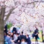 桜を見ながら優雅なひととき お花見でワインを楽しもう