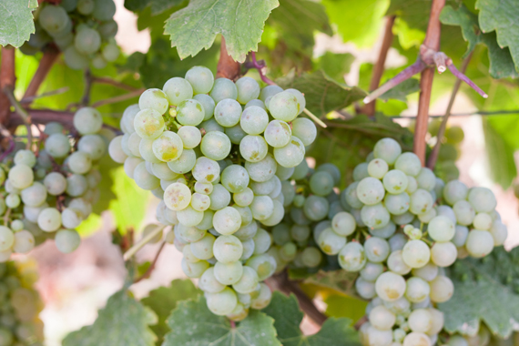 german_wine_4