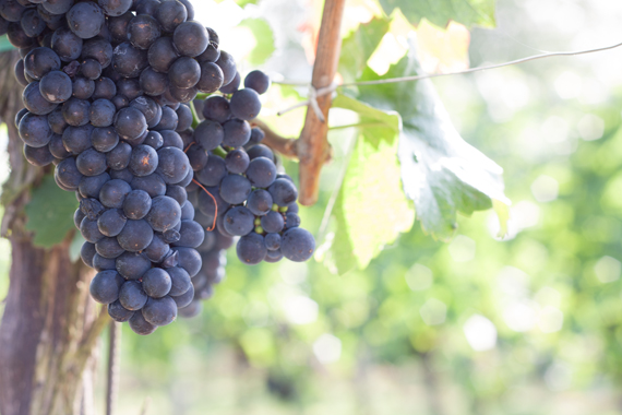 german_wine_6