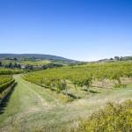 珠玉のイタリアワイン ヴェネト州ヴァルポリチェッラの魅惑の赤「アマローネ」