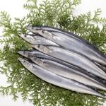 秋が旬の魚「鮭」や「秋刀魚」を使った料理に合うワインは?