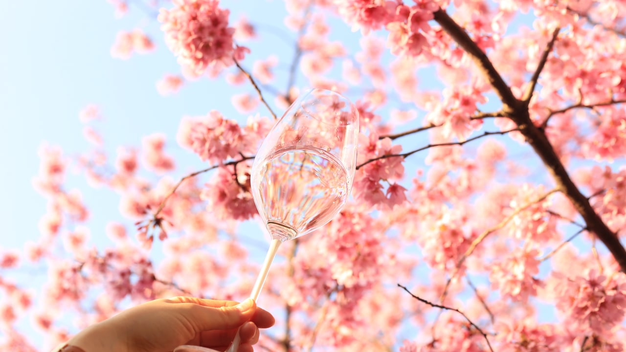 お花見におすすめの日本ワイン